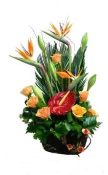 סידור ורדים גז גן עדן ואנטוריום 289 שח